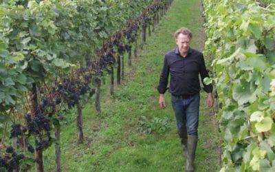 Wijn uit de Maasvallei op dezelfde manier beschermd als Champagne