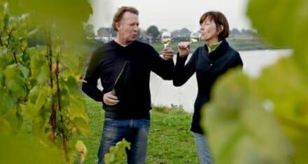 Felbegeerd 'edelrot' op druiven Aldeneyck
