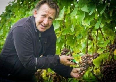 Zeldzame schimmel maakt Aldeneyck-wijn peperduur